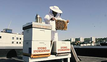 Honningproduksjon på sentertaket