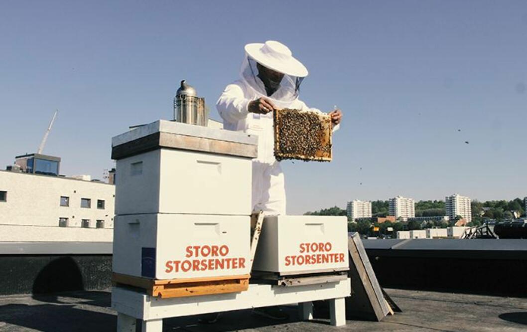De to første bikubene på taket kom i fjor. Nå kommer fire kuber til, og produksjonen tredobles forhåpentlig. (Foto: Storo Storsenter)