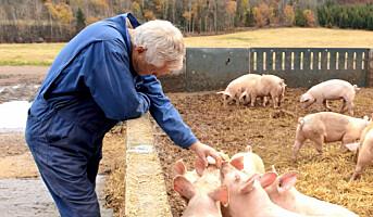 Satser på økologisk svin