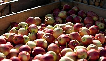 Rekordhøyt salg av norske epler