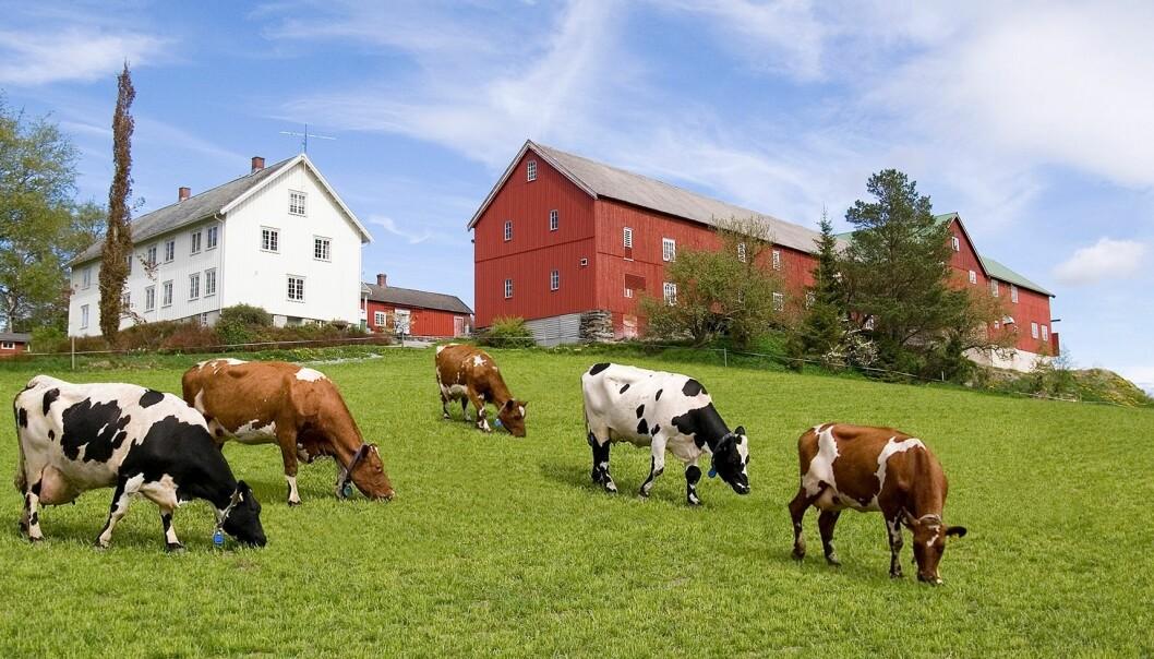 Mange lokalmatprodusenter sliter nå som gårdsutsalg, turismen og hoteller er stengt ned.