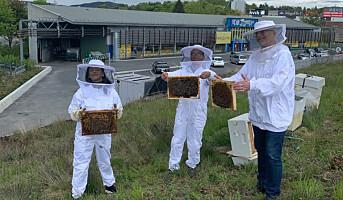 Kortreist honning på Alna Senter