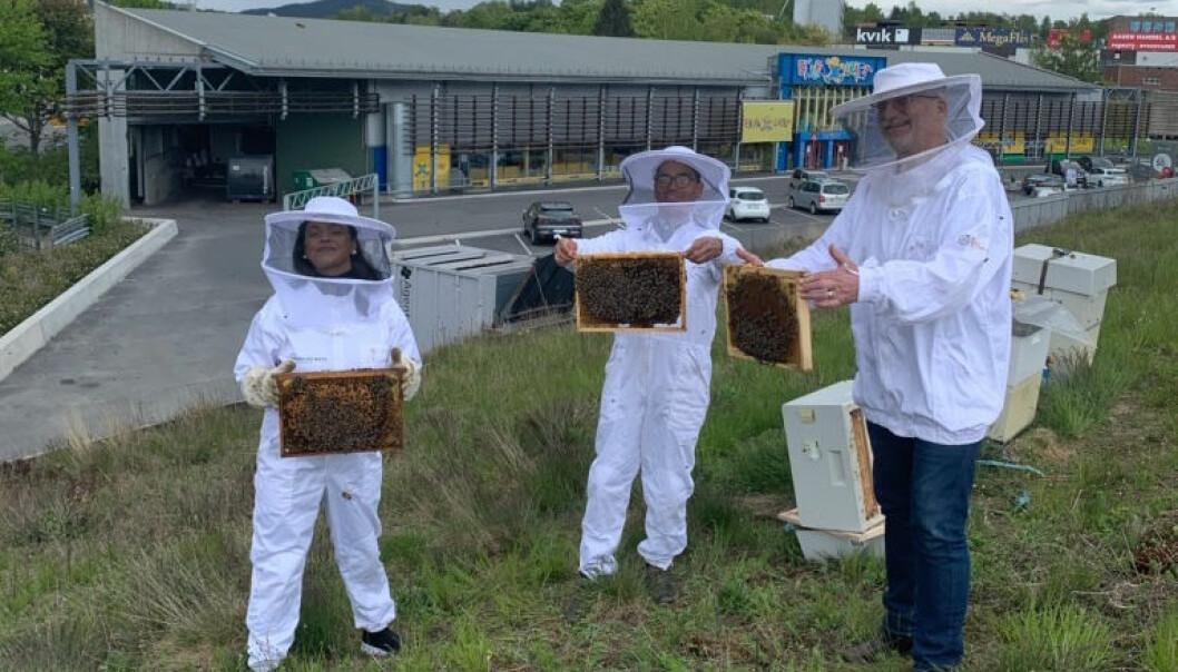 Varaordfører Kamzy Gunaratnam, birøkter Alexander Du Rietz og senterleder Hans Georg Helberg ser fram til miljøvennlig honningproduksjon på taket av Alna Senter.