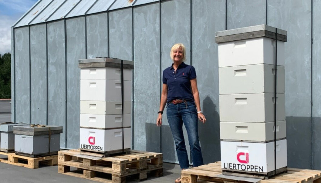 Senterleder Mette Kiilerich: – Biene trives på taket av Liertoppen.
