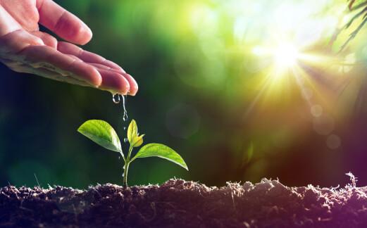 Enorm vekst innen skadedyr- og plantevernmidler