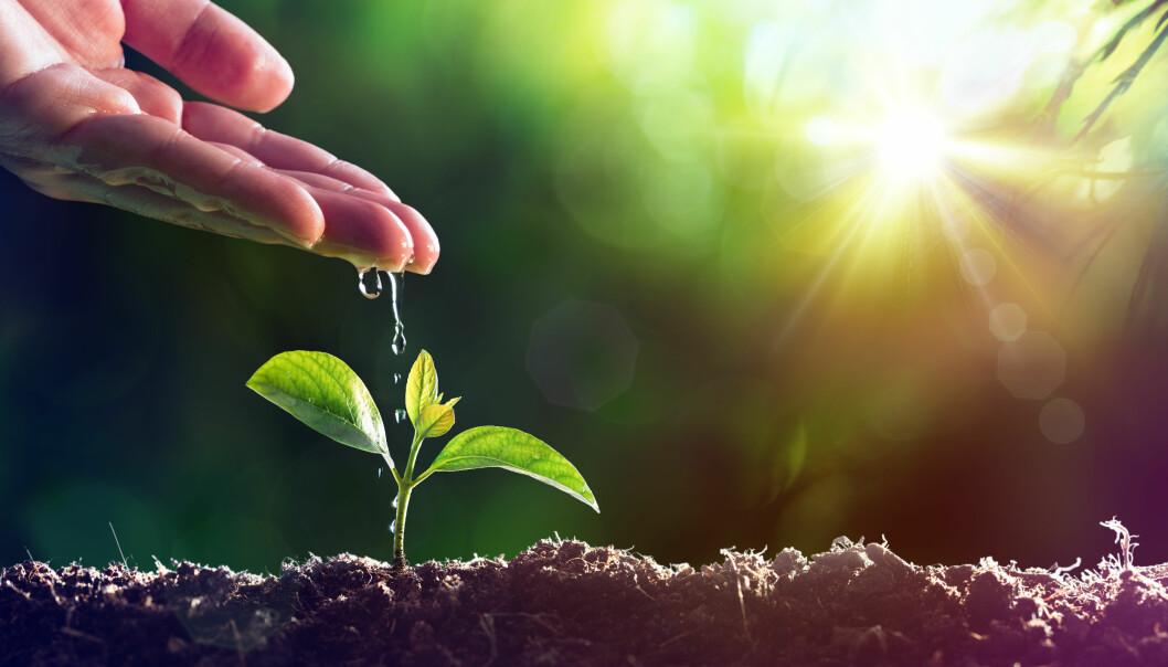 Vilofarm opplever stor vekst og er opptatt av å ta ansvarlige valg som bidrar til å gjøre en forskjell over tid.